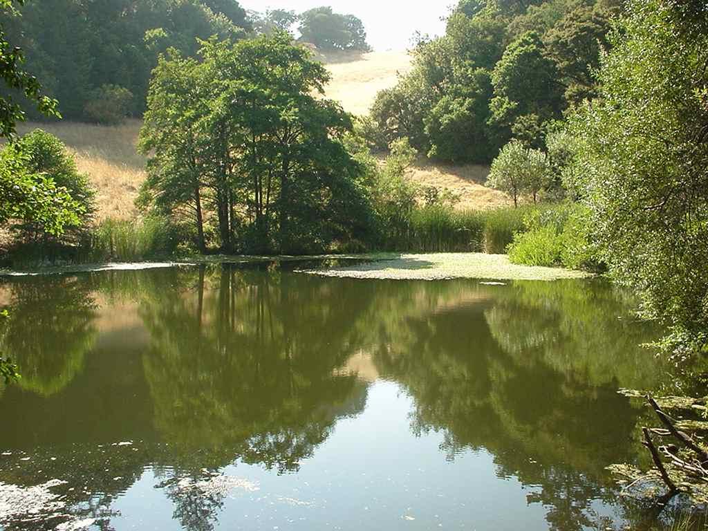 the-lake_0
